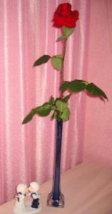 прекрасная роза (3)