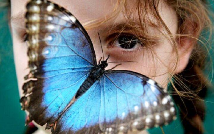 Олария Тойе. Бабочки для Риты (рассказ)